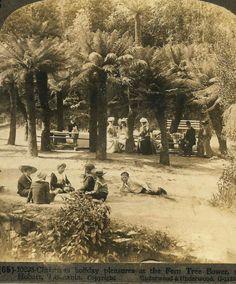 'Fern-Tree Bower', Tasmania, Australia   late 1800s