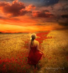 in a field of red poppies