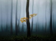 Fog coats a Balkan forest in Bulgaria in this National Geographic Photo of the Day.
