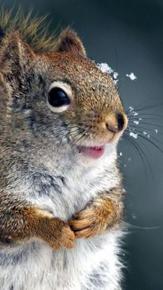 Id like to befriend a precious woodland creature like this one.