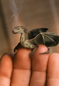 """Fairy tales do not tell children that dragons exist. Fairy tales tell children that dragons can be defeated. Tiny Dragon, Little Dragon, Elfen Fantasy, Fantasy Art, Magical Creatures, Fantasy Creatures, Wow Art, Mythological Creatures, Fantastic Beasts"