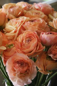 Peach Ranunculus - too dark of a peach - wants something lighter than this