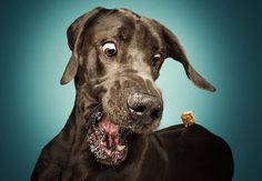 Смешные выражения морд собак, пытающихся поймать угощение  http://www.belnovosti.by/domashnie-zhivotnye/53974-smeshnye-vyrazheniya-mord-sobak-pytayushchikhsya-pojmat-ugoshchenie.html