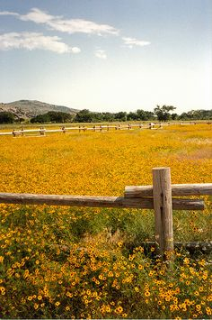 Wichita Mountains Refuge Wildflowers, Oklahoma, by Granger Meador, 1989 by gmeador, via Flickr