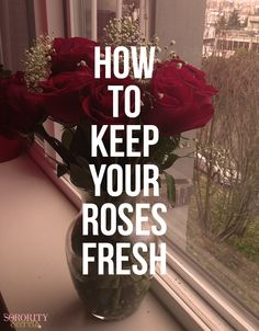 The Sorority Secrets: How To Keep Your Roses Fresh Justin Ryan, Sorority Secrets, Roses Valentines Day, Rose Care, Wooden Clogs, Big Sis, Dorm Ideas, Love Flowers, Helpful Tips