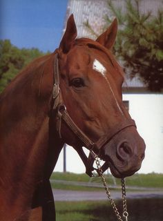Secretariat - Champion U.S racehorse who, in 1973, became the first U.S. Triple Crown Champion in 25 years, setting new race records in two of the three events in the Series - The Kentucky Derby, and the Belmont Stakes records that still stand today.