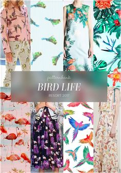 Bird Life » Giamba / Budgie Stripe by ajbstudio / Rochas / Stp 597 by Stampa / 551 Flamingos Print by Aina Martinez Snape / Giamba / Watercolor Parrots by Color Fuse / Red Valentino
