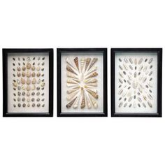 Shell Shadow Boxes