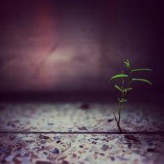 대리석 바닥 틈사이 작은나무, 그 비좁은 틈사이 올라온 놀라운 생명력. 한참을 바라 본다. 그리도 한참을 생각한다. #생명력 #나무 #tree #vitality