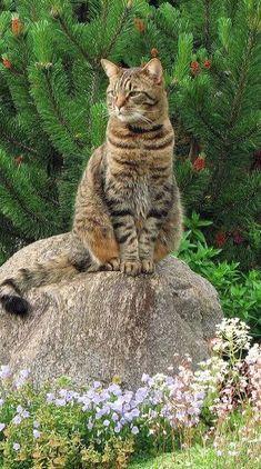 cat_grass_flowers_garden_rock_sitting_landscape_51916_640x1136   Flickr - Photo Sharing!