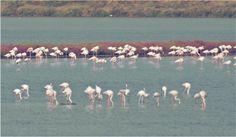 Ammirare il piumaggio roseo dei fenicotteri, tra le acque della laguna.