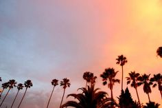 Palm Trees Tumblr Header