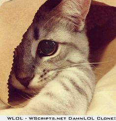 He loves his paper bags.