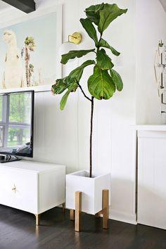 Комнатные цветы необходимо размещать на высоте, что позволит создать необычное дизайнерское решение.
