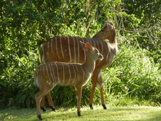 many more sightings at Ubizane . African Safari, South Africa, Giraffe, Cool Pictures, I Am Awesome, Southern, Birds, Animals, Beautiful