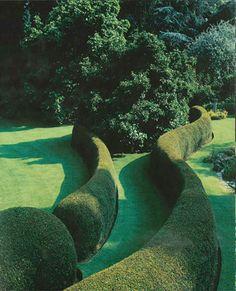 Green Sinewy topiary from Jacques Wirtz & Sons. Garden Hedges, Topiary Garden, Garden Art, Garden Landscaping, Garden Design, Garden Crafts, Formal Gardens, Outdoor Gardens, Garden Architecture