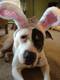 Happy Pitbull Easter by Amy Ferretti