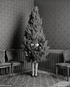 Oh Christmas Tree - sapin - Noel