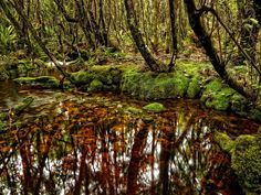 Mossy, tannin stained stream, Kawhaka Forest