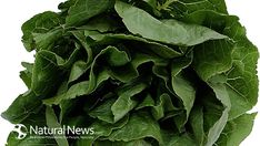 Spinach extract reduces cravings and increases weight loss, according to a recent study by Sweden's Lund University.  My recent article in NaturalNews has more on this new discovery:  http://blogs.naturalnews.com/spinach-extract-reduces-cravings-increases-weight-loss/