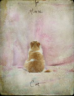 Cat and Mouse by Jamie Heiden