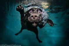 Dogs Underwater!