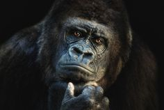 Best Award Winning Wildlife Photography Examples!