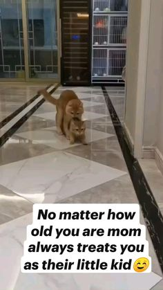 Cute Wild Animals, Cute Funny Animals, Animals Beautiful, Animals And Pets, Cute Little Kittens, Cute Cats, I Love Cats, Kittens Cutest, Funny Animal Videos
