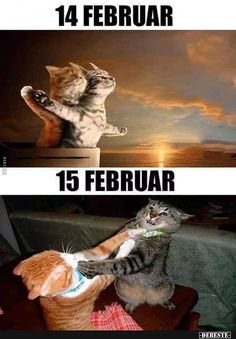funny cats and dogs ; funny cats can't stop laughing ; funny cats and dogs videos ; funny cats with captions Cute Animal Memes, Animal Jokes, Cute Funny Animals, Funny Animal Pictures, Funny Cats, Cute Funny Quotes, Crazy Funny Memes, Funny Relatable Memes, Funny Jokes