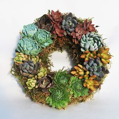 Colorful Succulents Wreath