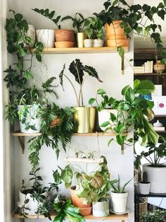 Surround yourself with plants and create a living indoor plant wall anywhere in your home! We installed three wood shelves and boom, a plant wall is born! Indoor Plant Shelves, Indoor Plant Wall, Small Indoor Plants, Indoor Plants Low Light, Plant Wall Diy, Small Space Gardening, Indoor Gardening, Bedroom Plants, Interior Plants