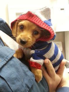 It's a puppy in a sweater.  Too cute!