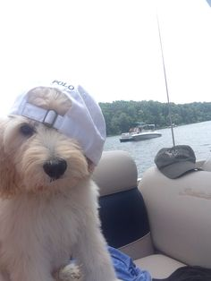Boating and animals are the perfect match | Want