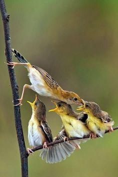 Pájaros con hambre :-)