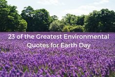 In honor of Earth Day I've put together this list of some of my favorite environmental quotes.