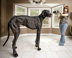 Guinnessworldrecords.com: Zeus