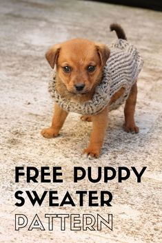xxs puppy sweaters, make a puppy sweater with this free knitting pattern perfect for a beginner.