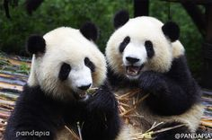 A nice weekend spend with Pandas