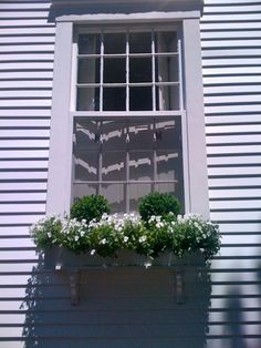 Boxwood in window boxes. Very cute!