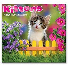 16 Month Wall Calendar 2018 - Kittens - Each Month Displays Full-Color Photograph. September 2017 - December 2018 Planning Calendar