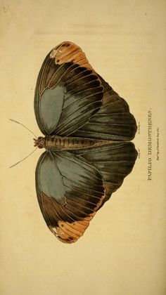 [Incomplete] - Arcana, or, The museum of natural history : - Biodiversity Heritage Library  http://www.biodiversitylibrary.org/item/120576#page/188/mode/1up