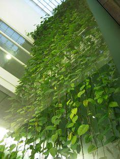 Vertical Vegetation