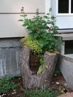 Hollow log into planter