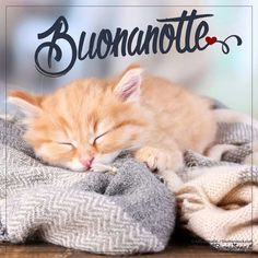 buonanotte micio gatto cuscino Good Morning Good Night, Cats And Kittens, Sarah Kay, Messages, Good Night, Bonjour, Italy