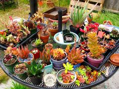 For some there's therapy. For the rest of us there's. #iheartsucculents