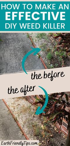 Weeds can takeover your entire yard overnight. But you don't have to turn to dangerous weed killers made with toxic chemicals to get rid of them. Instead, discover how to make this effective DIY weed killer. This homemade weed killer uses just a few simple and natural ingredients, yet it's amazingly effective at killing weeds! Keep your sidewalks, driveway, and walkways free of weeds when you learn how to make this DIY weed killer. eco-friendly|natural|homemade|DIY|how to make weed killer Weed Killer Homemade, How To Make Homemade, Killing Weeds, Weed Killers, Green Living Tips, Help The Environment, Natural Parenting, Sustainability