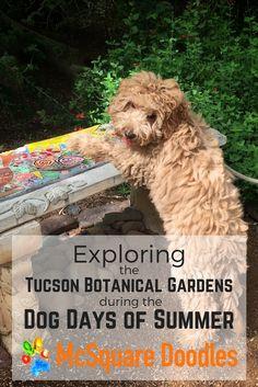 48 Best Dog Friendly Tucson Arizona Images On Pinterest Dog