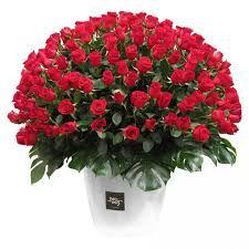 Send Flowers, Fresh Flowers, Black Dating, Nairobi, Flower Delivery, Audiobook, Kenya, Anchor, Range