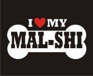 I love my Mal-Shi