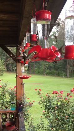 Inspiration to purchase or make hummingbird feeders and watch in fascination these little birds hover, feed, fight and just show up over and over again during the season. Endless hours of joy. Funny Animal Videos, Cute Funny Animals, Cute Baby Animals, Nature Animals, Animals And Pets, Beautiful Creatures, Animals Beautiful, Animals Amazing, Good Morning Flowers